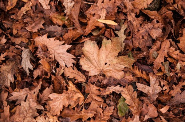 dry_dry_leaves_fall_leaves_632075.jpg
